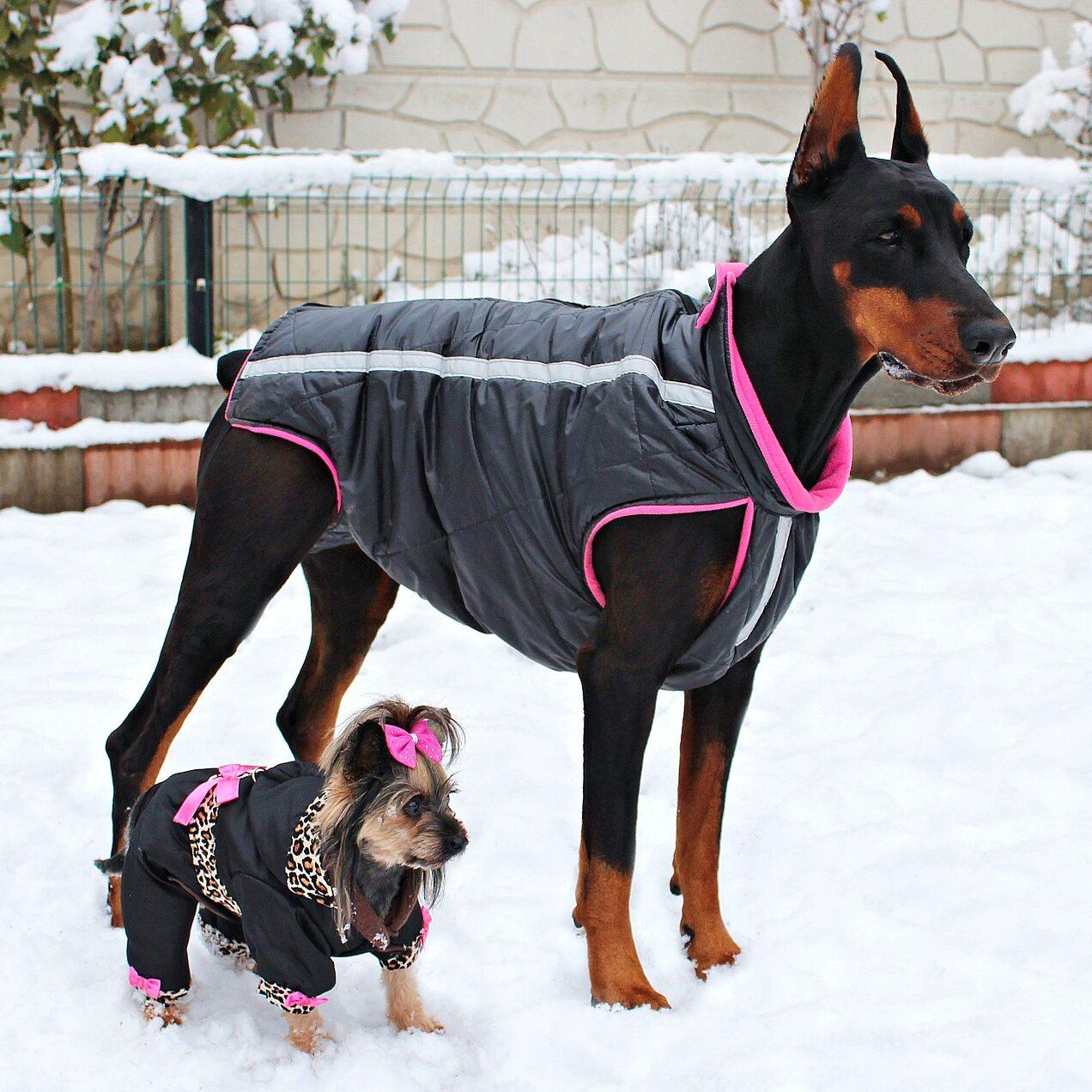 dog clothing designer premium profile